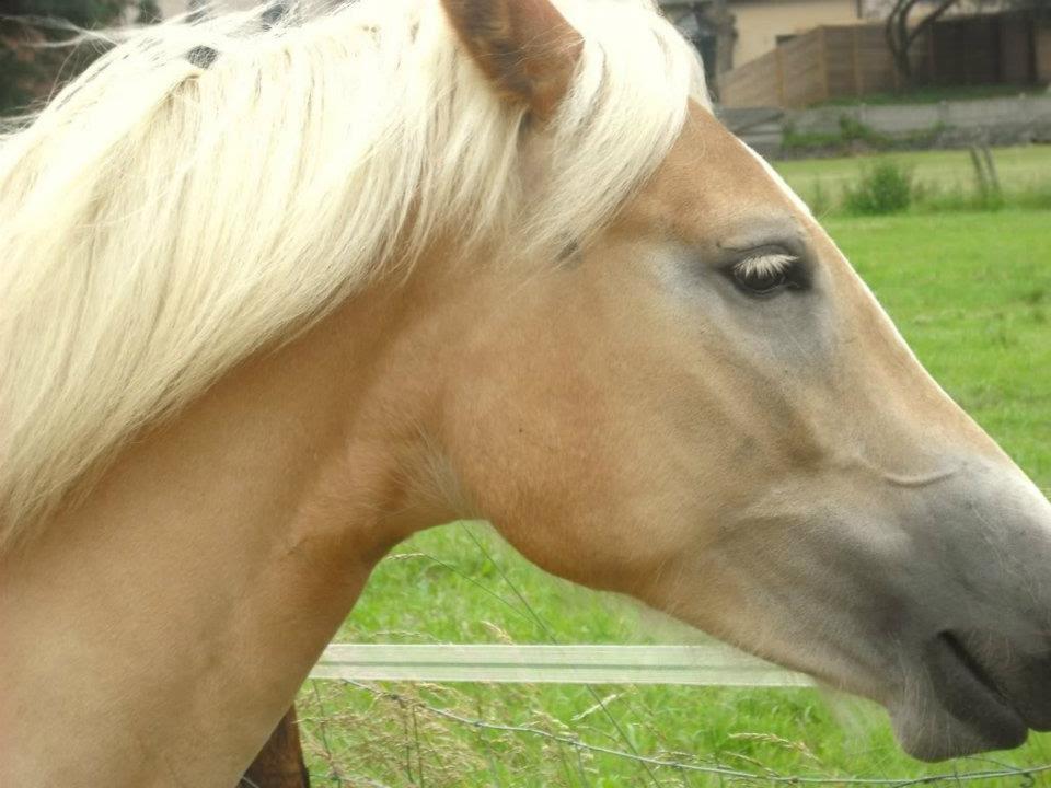 Paard-Hoofd-Azira-Doelgroep