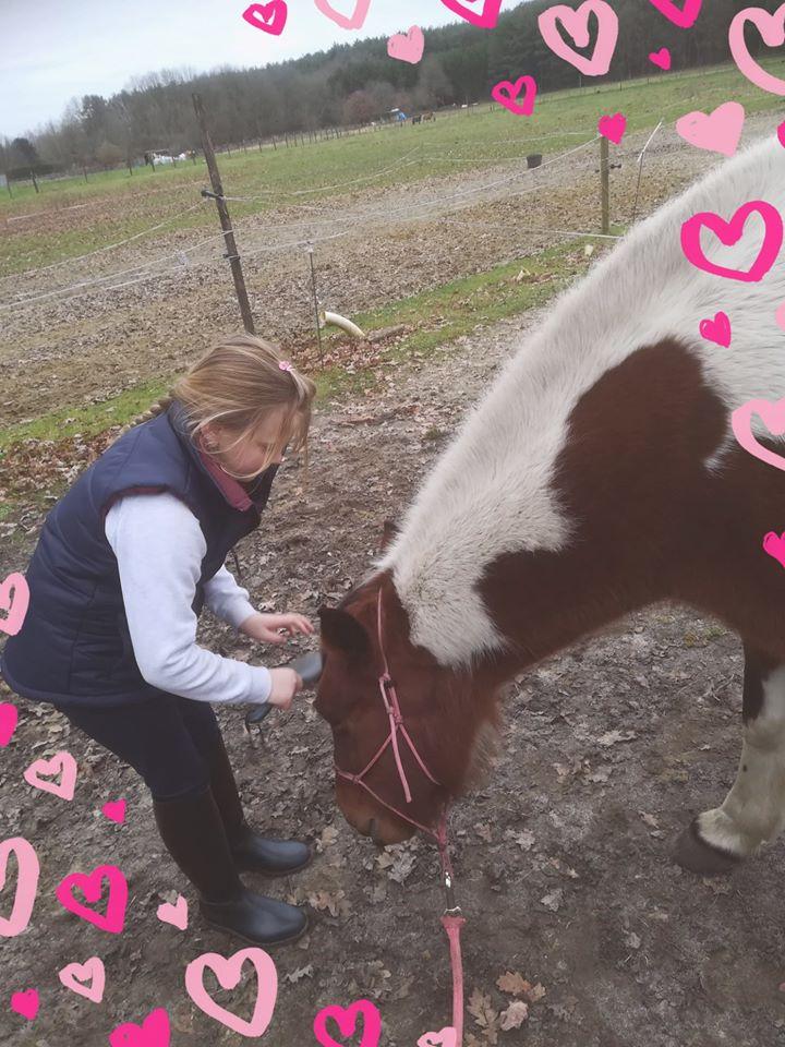 paardengewenning